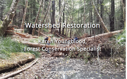 2020 Watershed Restoration