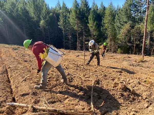 Tree Planting: Vasquez Reforestation crews